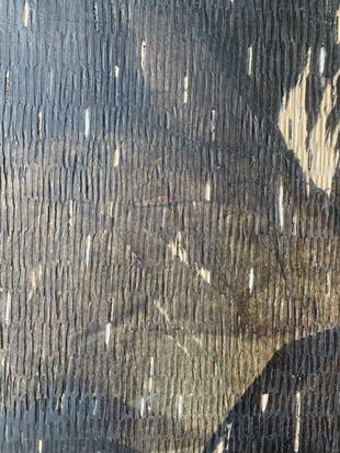 Tissue + Medium on wood (close up)