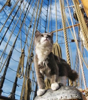 Animals On Board Immigrant Sailing Ships in 1882
