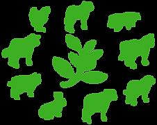 Comptoir des Plantes Médicinales