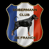 doberman club de france