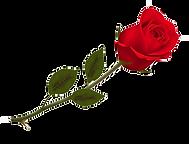 44-443671_transparent-beautiful-red-rose