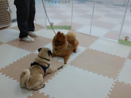 犬同士の遊び