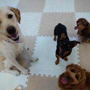 犬社会の集い