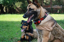Detection dogs in their uniforms