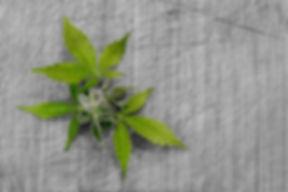 leaf-3065626_640.jpg