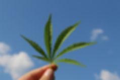 hemp-leaf-3661209_640.jpg