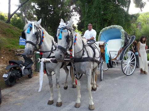 Διακόσμηση άμαξας με γυψόφυλλο και φαλαινόψις
