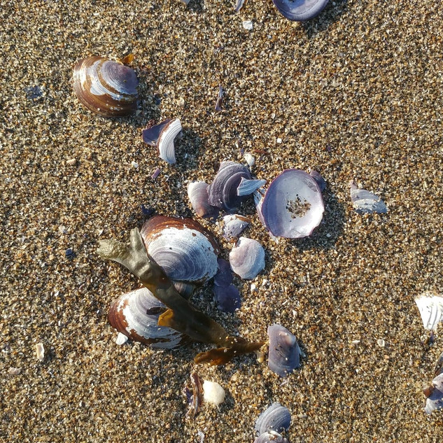 Sea Shell in Stanly Park