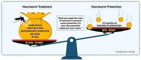 heartworm treatment vs prevention.JPG