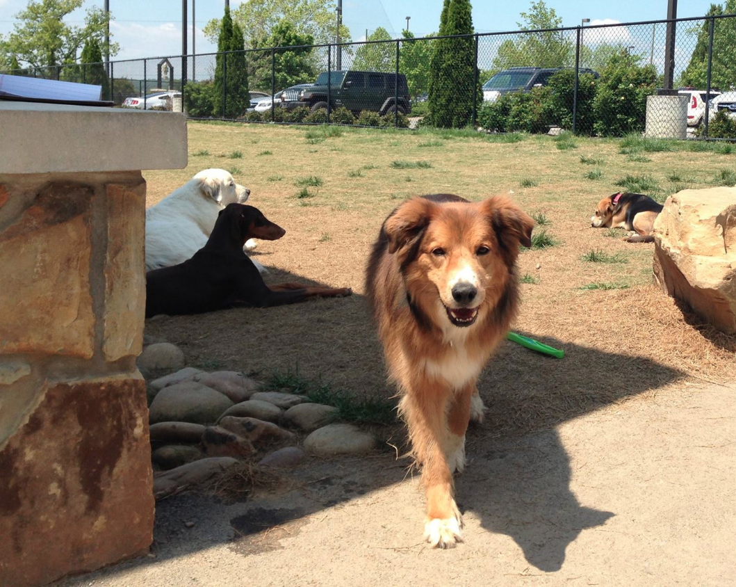 PetSafe Village Dog Park