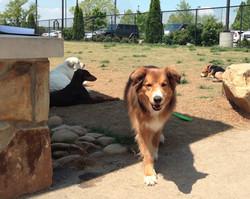 PetSafe Village Dog Park