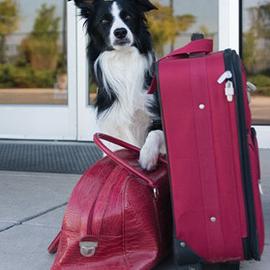 dog boarding knowxville tn
