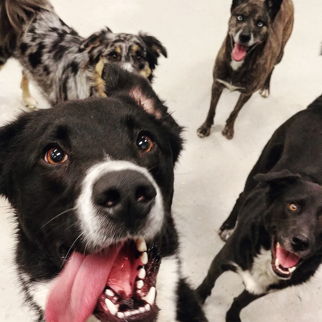 knoxville dog daycare
