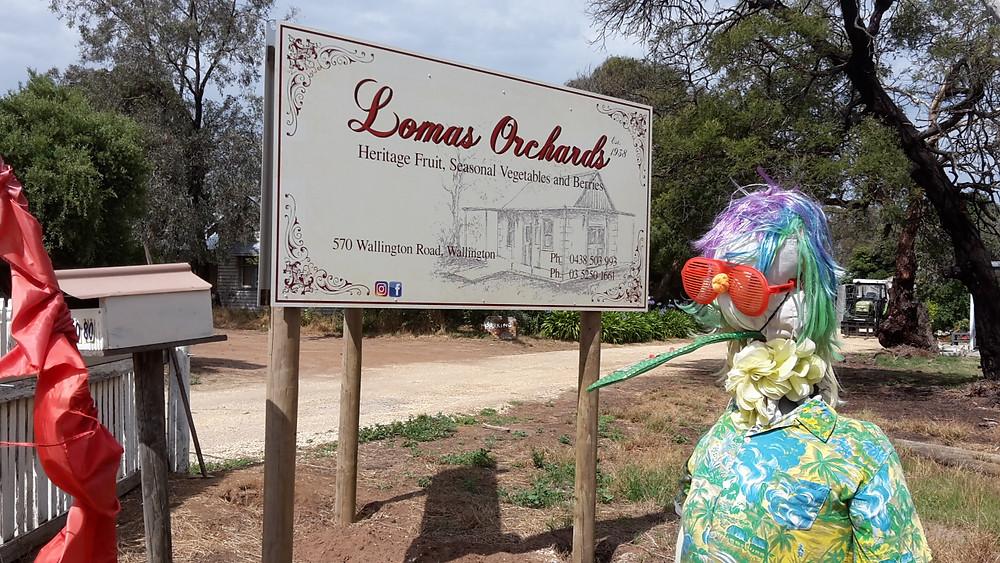 Lomas Scarecrow