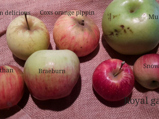 Taste a heritage apple at Wallington