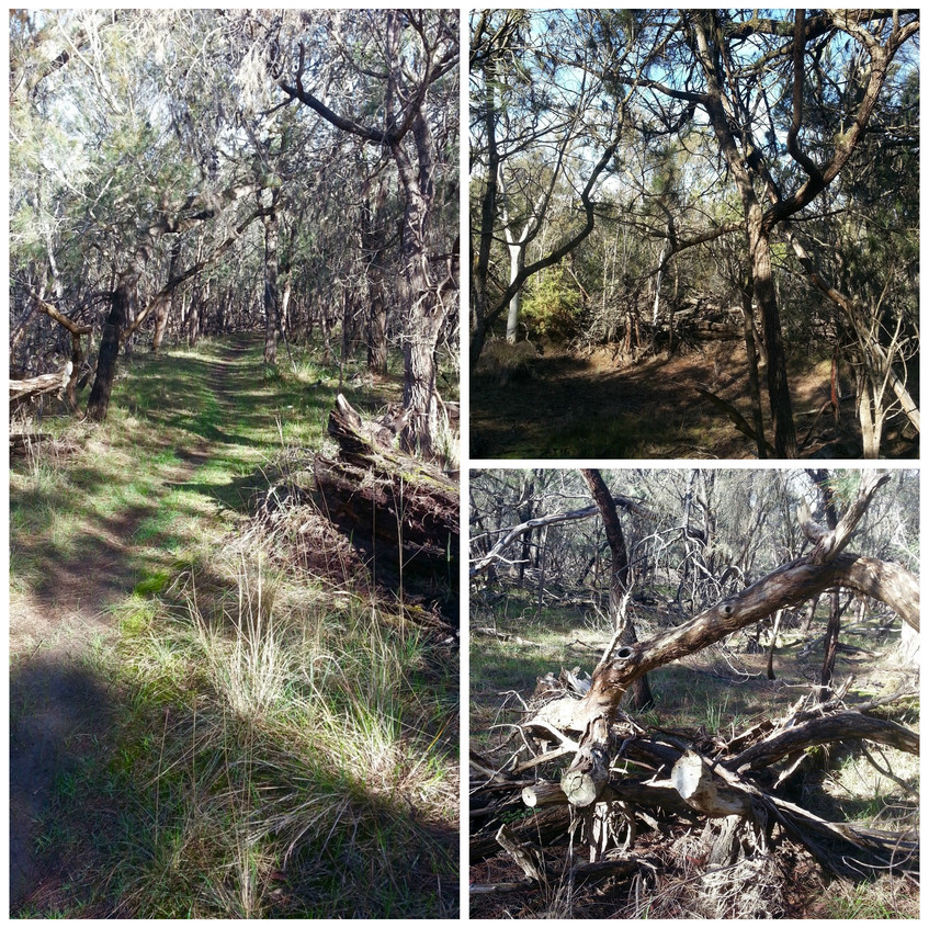 ocean-grove-nature-reserve-woodland31