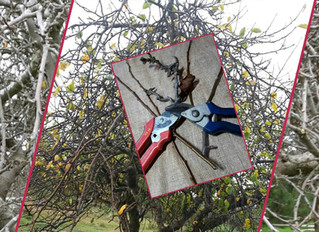 Identify your backyard apple for Free