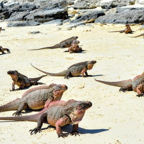 Iguana Cay, Exuma, Bahamas