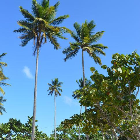 Playa Punta Popy, LAs Terrenas, Dominican Republic
