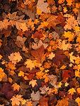 fall-foliage-111315_1920.jpg