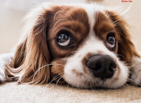Dog Bites: First Aid Treatment to Avoid Infection