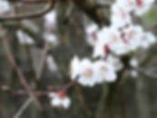 Frühling03202020.jpg