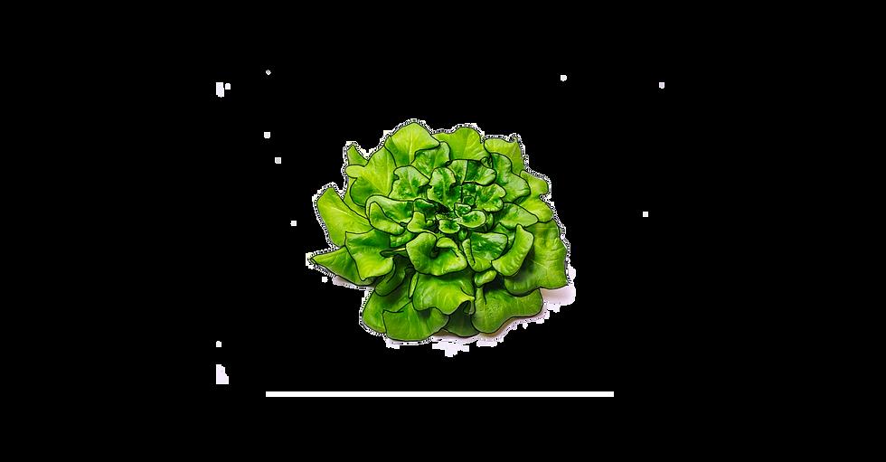 salade et traits.png