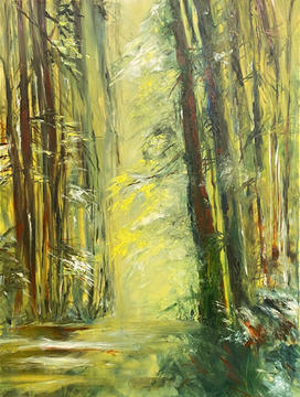 Sunlit Redwoods