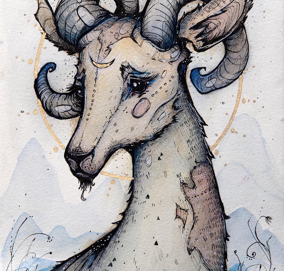 'The Himayalan Goat'