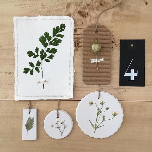 Box herbiers 4