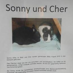 Sonny ve Cher ile tanışın... Göl yakınında bulunmuş. Birinin dişi çekilmiş. Beraber sahiplendirilsin isteniyormuş. — Tierschutzverein München
