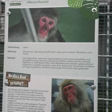 Maymun bile var! — Tierschutzverein München