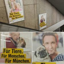 """Münih metrosundan bir detay... Hayvanları Koruma Derneği afişleri...  """"Hayvanlar için, İnsanlar için, Münih için""""  Afiş aslında şunu anlatıyor; Tüm canlıların yaşamı birbiriyle dengeli olmalı... Hayvanlar doğru koşullarda yaşatılmazsa, insanlar doğru yaşayamaz, insanlar ve hayvanlar olması gerektiği şartlarda yaşamazsa, şehirler var olamaz...  Türkiye'de sıkça duyduğumuz """"Ne hayvanı! çocuklar için bir şey yapsanıza!"""" gibi sığ bir düşünce yok! Çünkü hayvanlara değer verdiğinizde, yaşama, insana ve çocuklara da değer verip fayda sağlıyorsunuz.  Bütünü görebilelim diledim bugün...  Çocuk, yaşlı, insan, ağaç farketmeksizin çalışan, sistemi düzeltmek için uğraş veren tüm gönüllülere kalpten sevgilerimle..."""