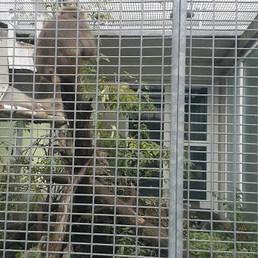 Başka bir ülkeye götürülürken bulunmuş bir maymun.... — Tierschutzverein München