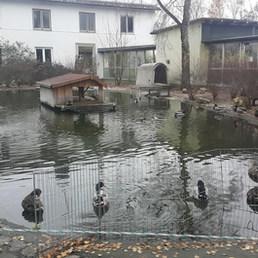 1842'de Hayvanları Koruma Derneği ve Barınağı olarak geçen binanın arka tarafı... Küçük bir kuğulu park... — Tierschutzverein München