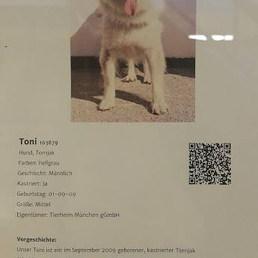 Toni ile tanışın!  Yaşlı olduğu için sağırmış biraz... 6 saat evde yalnız kalabiliyormuş. çocuğu ve köpeği olmayan biri için uygunmuş. — Tierschutzverein München