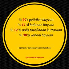 Sayılarla barınakta bulunan hayvanlar
