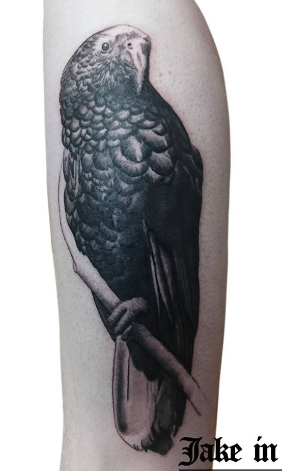 New Zealand Native Kaka Tattoo
