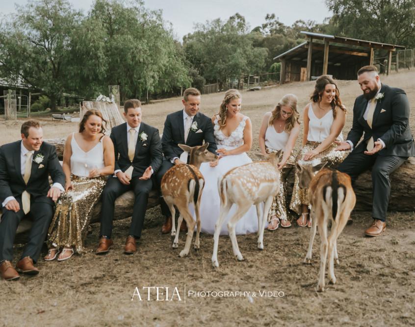 relaxed fun wedding celebrants melbourne