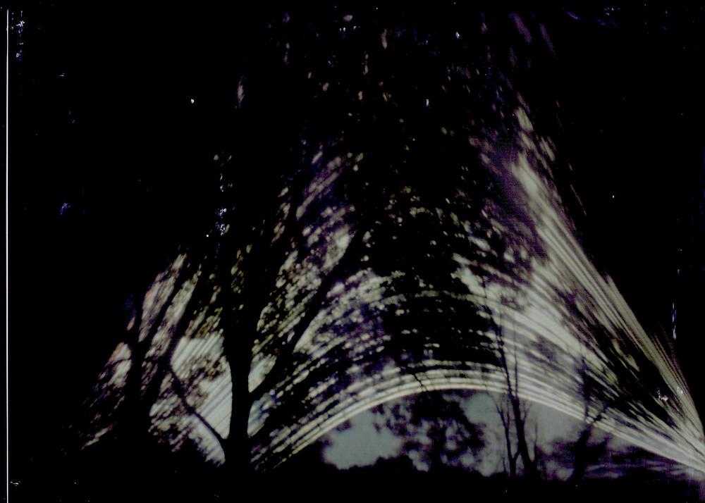 Solargraph image through dark trees at wetland, Dec 2019.