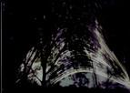 December Solstice Wetlands Solargraphs