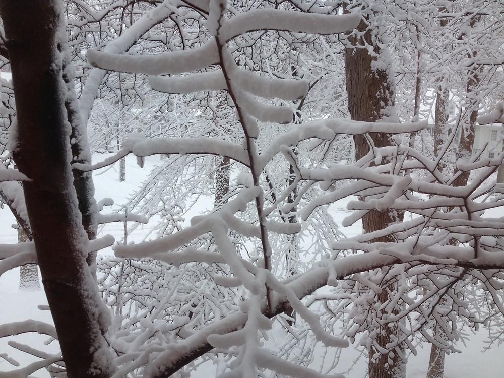 snow-trees.JPG