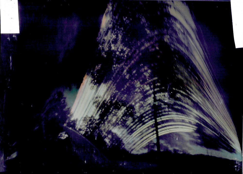 Solargraph result with leafy tree; sundial gnomon at bottom left of image..