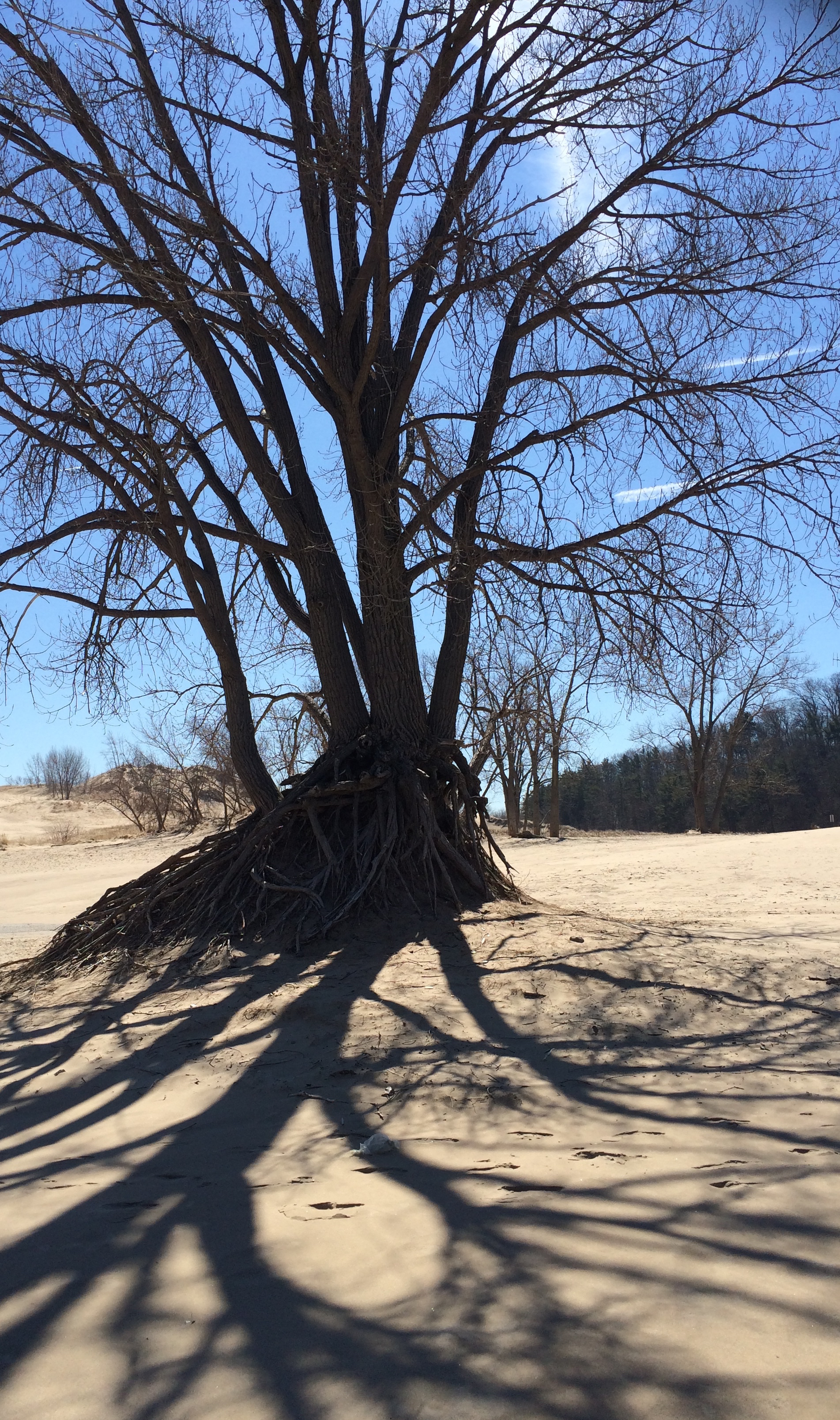dunes-tree-shadows.jpg
