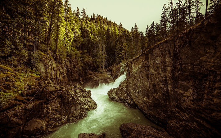 landscape_trees_forest_river-79477.jpg