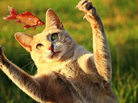10 conseils nutritionnels pour améliorer les habitudes alimentaires de votre chat
