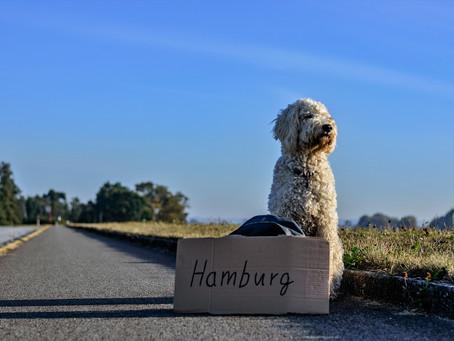 Tout ce dont vous avez besoin pour voyager avec votre chien