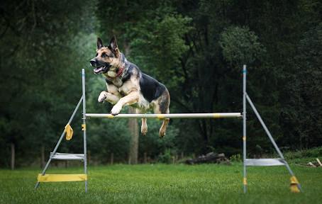 Comment les chiens nous aident au quotidien ?