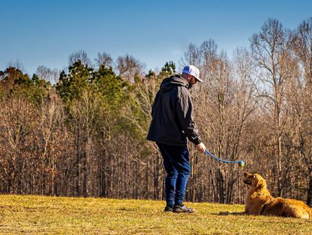 Training a deaf dog