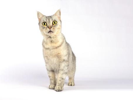 Votre chat a un comportement inhabituel ? On peut vous aider à comprendre.